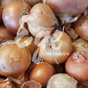 yerel soğan tohumu atalık