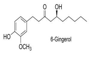 gingerol nedir zencefil