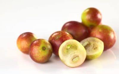 Camu Camu  Meyvesi: C Vitamini Dolu Tropikal Lezzet
