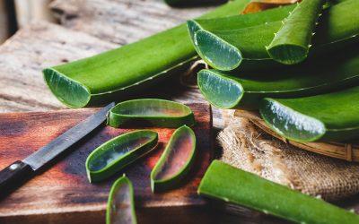 Aloe Vera Nasıl Kullanılır? Bebeklere Sürülür mü?