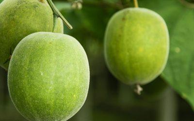 Keşiş Meyvesi: Yapay Şekere 0 Kalorili Yeni Alternatif