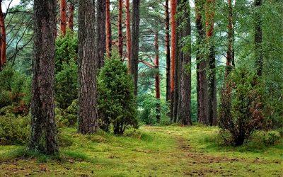 Orman Terapisi Nedir? Sağlık ve Huzura Götüren Terapi
