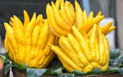 Buda'nın Eli Meyvesi Nedir? Nasıl Yenir?