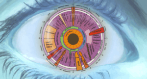 Göz İridoloji