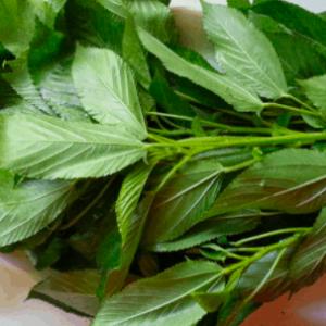 Molehiya