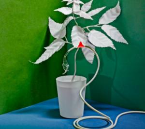Bitkilerle iletişim BacksterEtkisi
