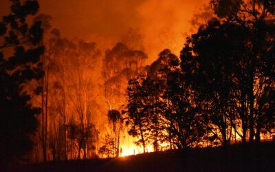 Orman Yangınlarının Önlenmesi için Neler Yapabiliriz?