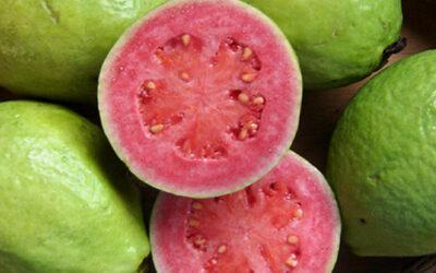 Guava Meyvesi Nerede Yetişir? Nasıl Yenir?